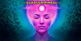 Resultado de imagen de Cómo desintoxicar la Glándula Pineal