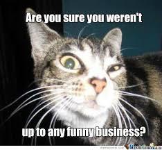 Suspicious Cat by fluttershy - Meme Center via Relatably.com