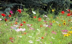 Small Picture Perennial Wildflower Garden Design Colorado Native Landscaping