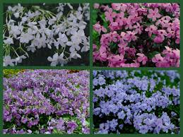 Image result for beautiful ground covers