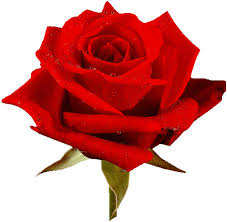 Image result for graphics for rose