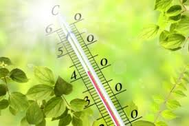 Risultati immagini per estate caldo foglie ingiallite caldo