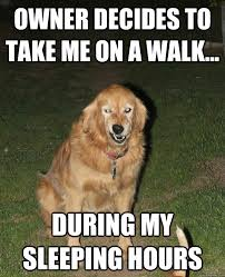 owner decides to take me on a walk... during my sleeping hours ... via Relatably.com