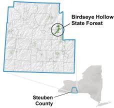 Birdseye <b>Hollow</b> State Forest - NYS Dept. of Environmental ...