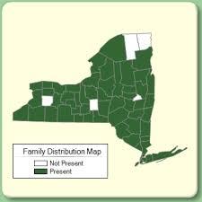 Scrophulariaceae - Family Page - NYFA: New York Flora Atlas ...