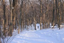 stopping by working woods on a snowy evening cross country skiing in a northern wisconsin hardwood forest