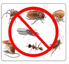 قمة الامتياز لمكافحة الحشرات بالدمام