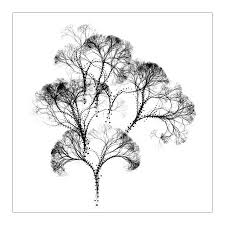 Image result for free image of a tree
