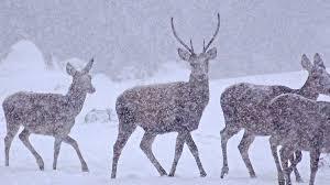WWF-Canada - <b>Happy New Deer</b>! | Facebook