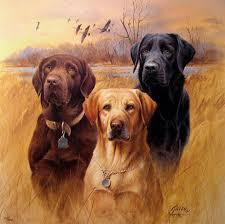 Δηλητηριάσεις κυνηγετικών σκύλων στην Κύπρο...