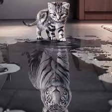 Bildergebnis für Die Katze und der Spiegel