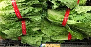 California romaine lettuce tainted with E coli sickens 102 - Los ...