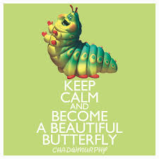 butterflies in speak memory beautiful butterfly