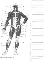 muscular system labeling worksheet rringband label muscles worksheet body muscles health