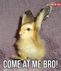 Random Cuteness on Pinterest | Cute Animal Memes, Animal Memes and ... via Relatably.com
