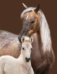 60 Best Mare and foal images | <b>Horses</b>, Beautiful <b>horses</b>, Animals ...