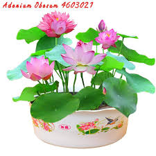 <b>hot sale 100</b>% <b>real</b> Bowl lotus pots Water lilies Hydroponic plants ...