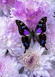 70 Best <b>Butterfly wall</b> decor <b>images</b> | Butterfly, Beautiful butterflies ...