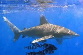 أكبر تجميع لأجمل صور من اعماق البحار (سبحان الله الخالق العظيم) Images?q=tbn:ANd9GcQoxV8u54J9iteyUfKIOCQoF2Qap8EDoViNyVIEb2JUbj_Akgt9