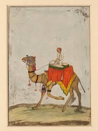 תוצאת תמונה עבור camels