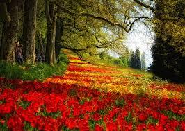 لكل محبي صور الطبيعة  اكبر تجميع لصور الطبيعة - صفحة 3 Images?q=tbn:ANd9GcQp6pRtYLrxOzjcHe6G7PAart1cXevdSmOT2MQZrB70ddP4LeOZeA