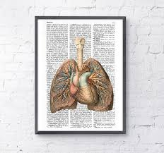 decor yellow leopard wild  lungs and heart human anatomy print anatomy art gift human anatomy ar