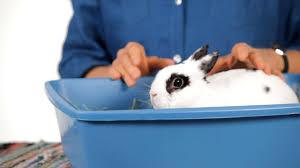 Can I Keep a <b>Rabbit</b> in My <b>Child's Room</b>? | <b>Pet Rabbits</b> - YouTube