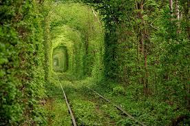 لكل محبي صور الطبيعة  اكبر تجميع لصور الطبيعة Images?q=tbn:ANd9GcQpX7arOAkc_Oujuf10vyiTF_fPW5vMWEmJxaQa8SVvGs3URMi3sQ