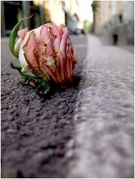 مراسم موت الامل  Images?q=tbn:ANd9GcQpc-1KAAX71KIvNoFUajx_3A3wOh5W-S7iML9LV3JdilQLv5NH2w