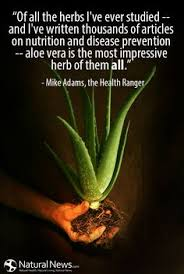 Get well soon! on Pinterest | Medicinal Plants, Aloe Vera and ... via Relatably.com