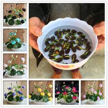 Popular <b>Bowl</b> Garden-Buy Cheap <b>Bowl</b> Garden lots from China <b>Bowl</b> ...