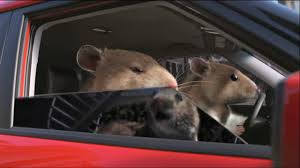 Kia Soul Commercial Song Kia Soul Hamster Commercial In Hdhigh Definition Youtube