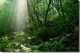「森」の画像検索結果