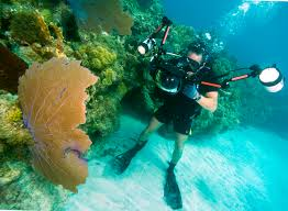 u s department of defense photo essay u s navy petty officer 2nd class scott raegen photographs coral during underwater photography training off the