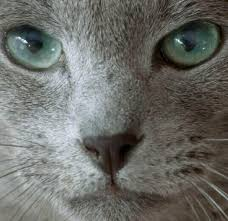 Sheba (Шеба) - <b>корм для кошек</b>. Официальный сайт   Sheba