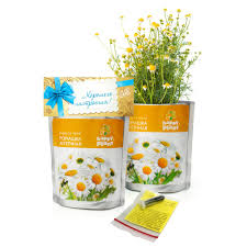 """<b>Happy</b> Plant"" <b>Набор</b> для выращивания Ромашка аптечная купить ..."