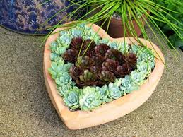idees succulent arrange heart shape arrange cool