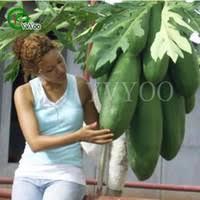 <b>Papaya Seeds</b> UK