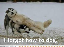 Meme Alert: Dogs! - Comediva via Relatably.com