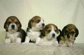Địa chỉ phân phối thiết bị gps cho thú cưng chính hãng ở hà nội