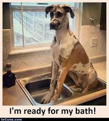 Great Dane Bath Time! Meme Generator - Captionator Caption ... via Relatably.com