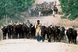 """Résultat de recherche d'images pour """"Increase Livestock Production cameroon"""""""