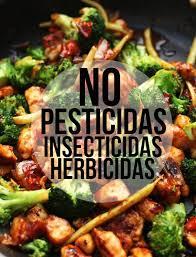 Resultado de imagen para alimentos organicos