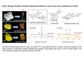 Molecules | Free Full-Text | Change of Petals′ Color and Chemical ...