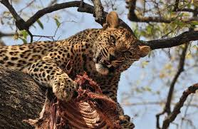 save our wildlife college essay   cyber essays free essays on save wildlife through   essay depot