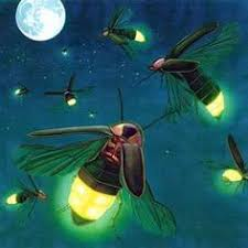 Image result for fireflies