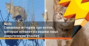 Смешные <b>истории</b> про котов, которые оставят на вашем лице ...