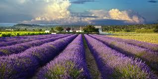 Регионы Франции: Прованс - достопримечательности, города, путеводители, описания, карты, маршруты