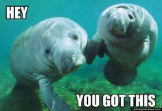 Manatees! on Pinterest | Bright Eyes Lyrics, Keep Calm And Love ... via Relatably.com