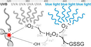 <b>Blue light</b>-induced oxidative stress in live skin - ScienceDirect